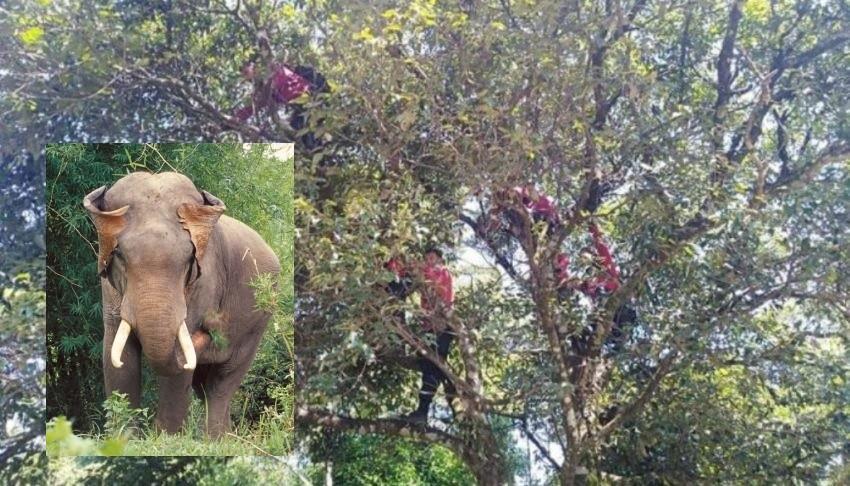Wild Elephants northern Thailand