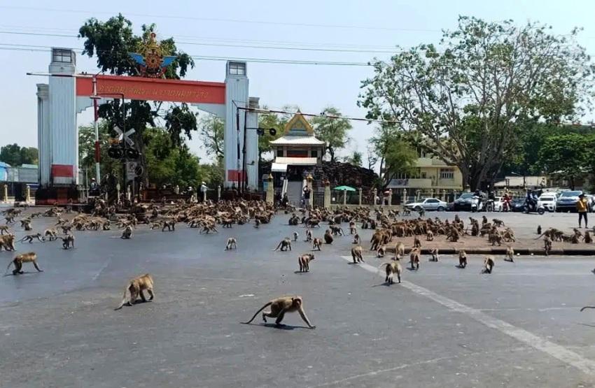 Animals Worldwide Take Over During Coronavirus Lockdown