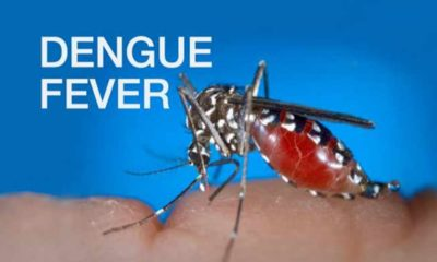 dengue fever outbreak northeastern thailand,