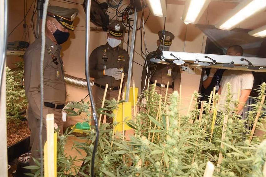 Online Marijuana Syndicate and Grow Opp