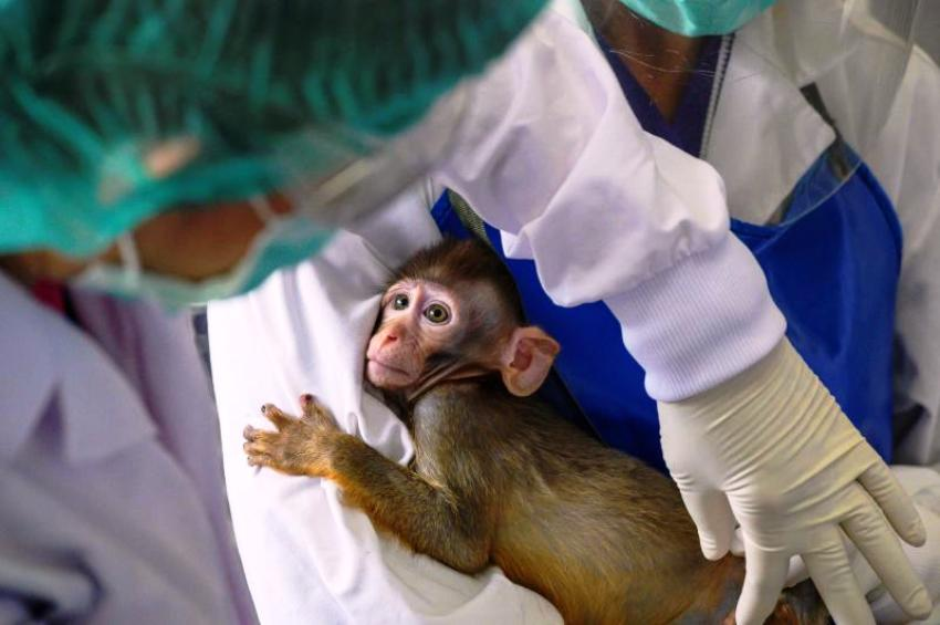 Thailand, Covid-19, Vaccine, Monkeys