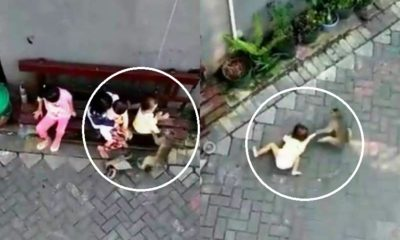 Video of Monkey Grabbing Toddler Shocks Netizens Worldwide