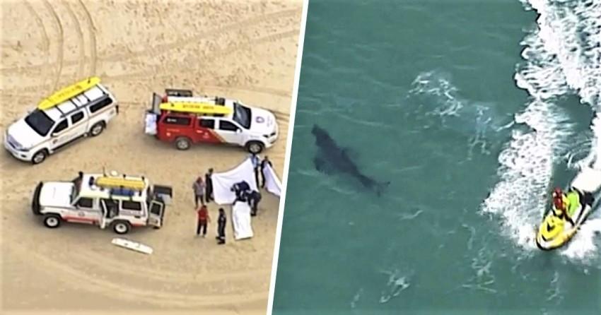 shark, sufer, australia, attack