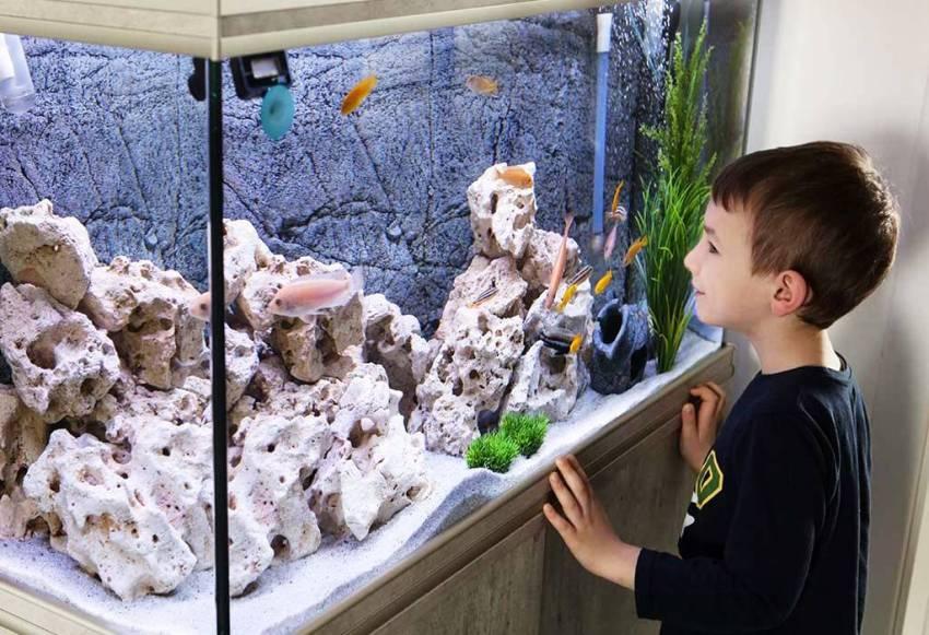 Turtle Aquarium Hobby Fish Tank