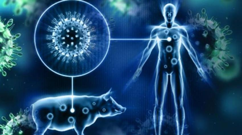 swine flu virus, Threat, Thailand