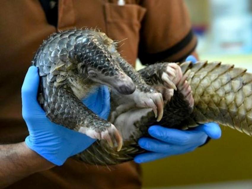 Vietnam, wild animals, wildlife trade