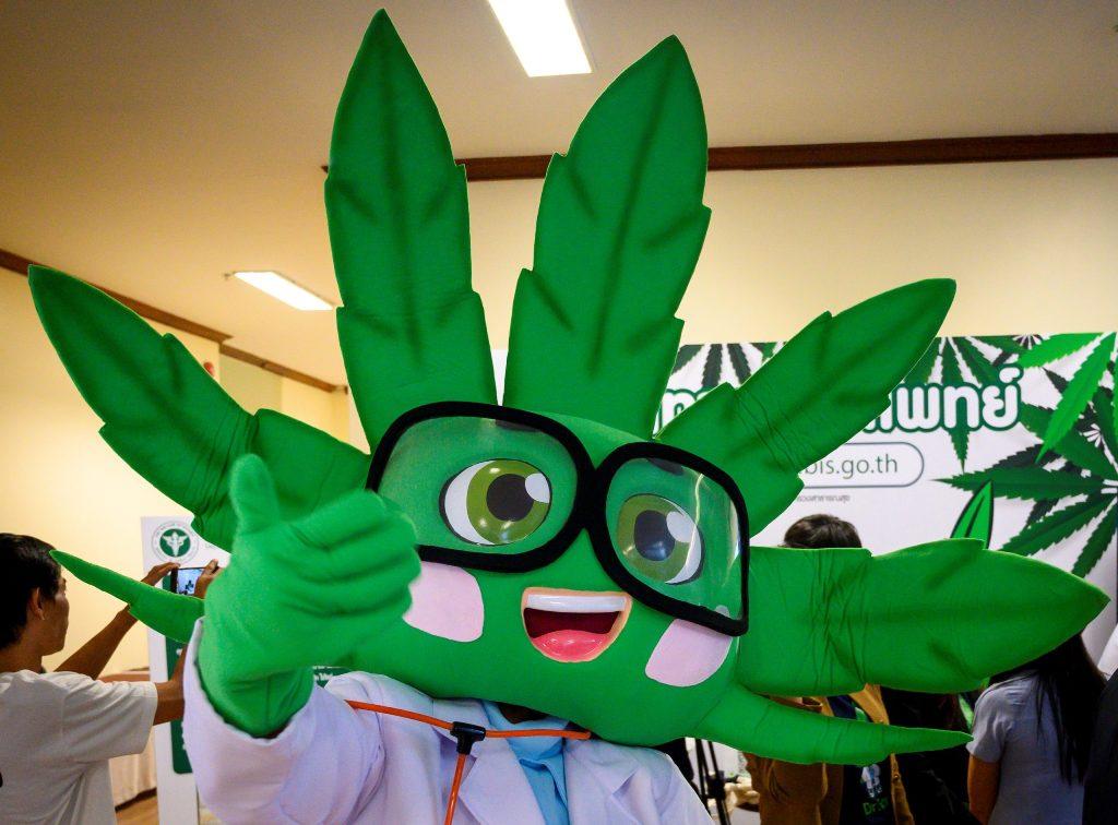 medical cannabis, thailand