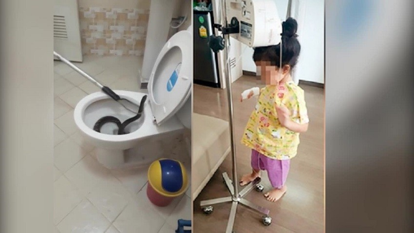 snake, toilet, bangkok, Thailand
