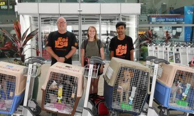 Flight Volunteers Thailand's Soi Dog Foundation