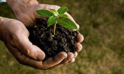 Soil Conditioner or Soil Amendment