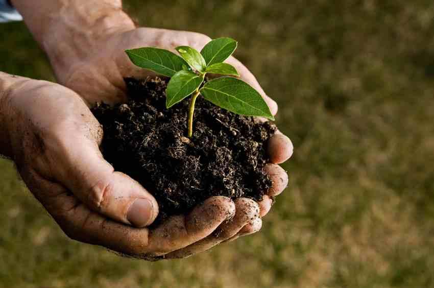 Soil Conditioner or Soil Amendment