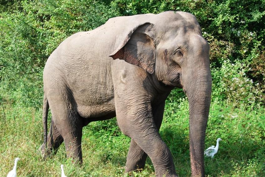 Elephant, Thailand