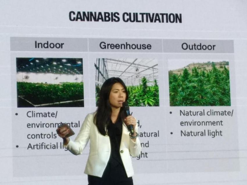 medical marijuana cultivation, thailand
