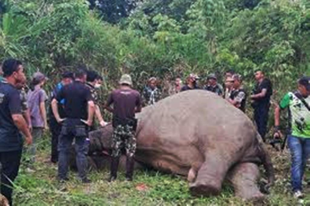 Elephant, Thailand Ivory, poachers