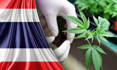 The Legalization of Marijuana andCannabis For Medicinal Use In Thailand