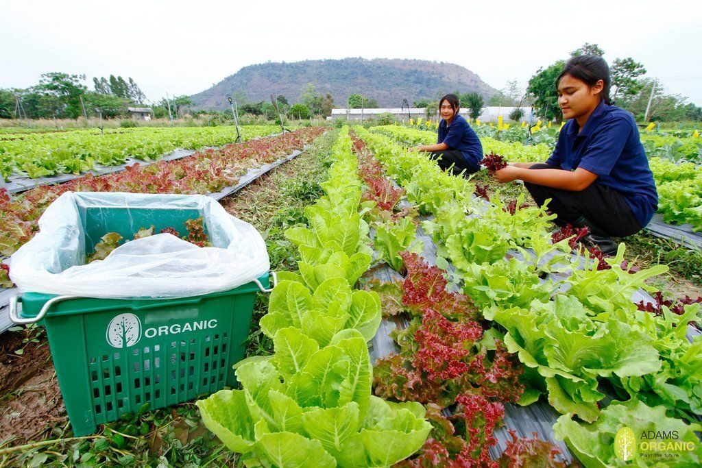 Agriculture Minister Wants Thailand to Become the Worlds Food Bank, Farm, Farmers