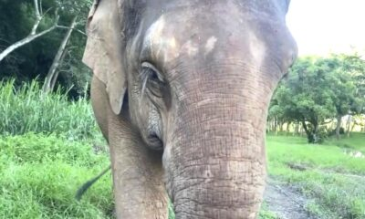 Charity Offers Live Zoom With an Elephant in Northern Thailand