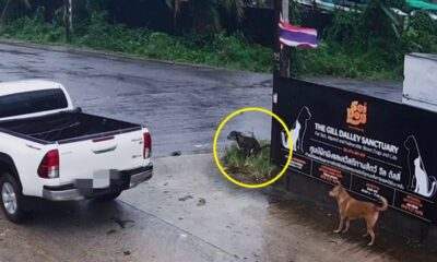 Irishman Charged for Abandoning His Dog at Soi Dog Foundation
