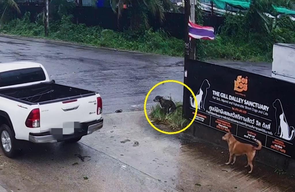 Irishman Charged for Abandoning His Dog at Soi Dog Foundation
