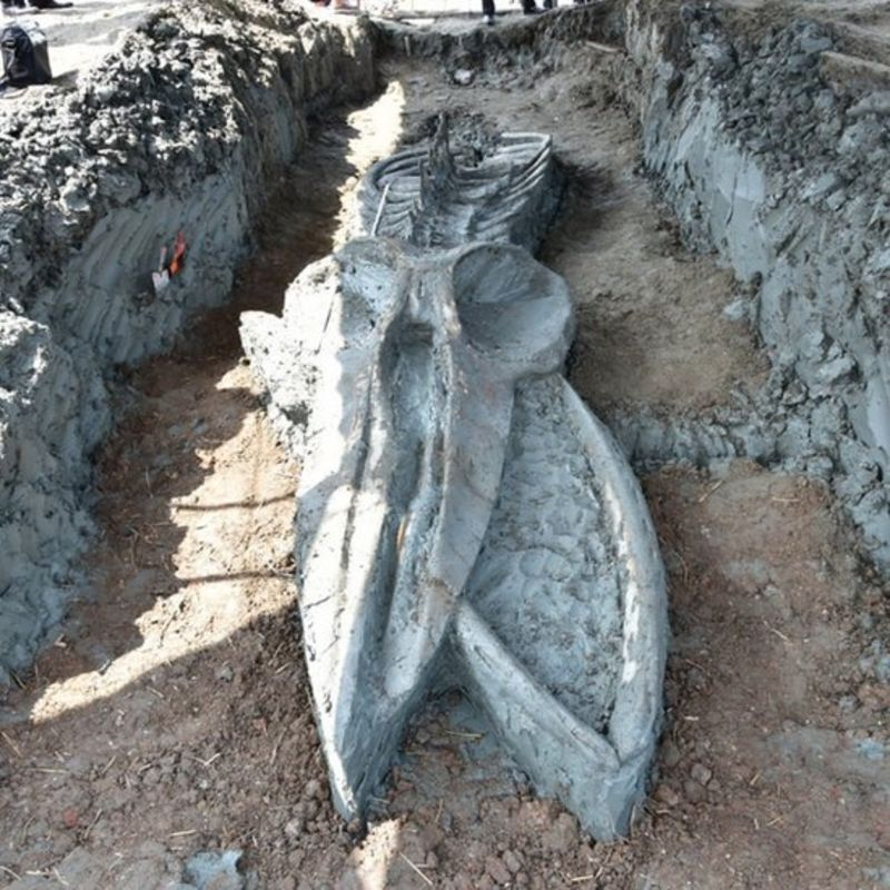 Ancient Bryde's Whale Skeleton Discovered in Central Thailand