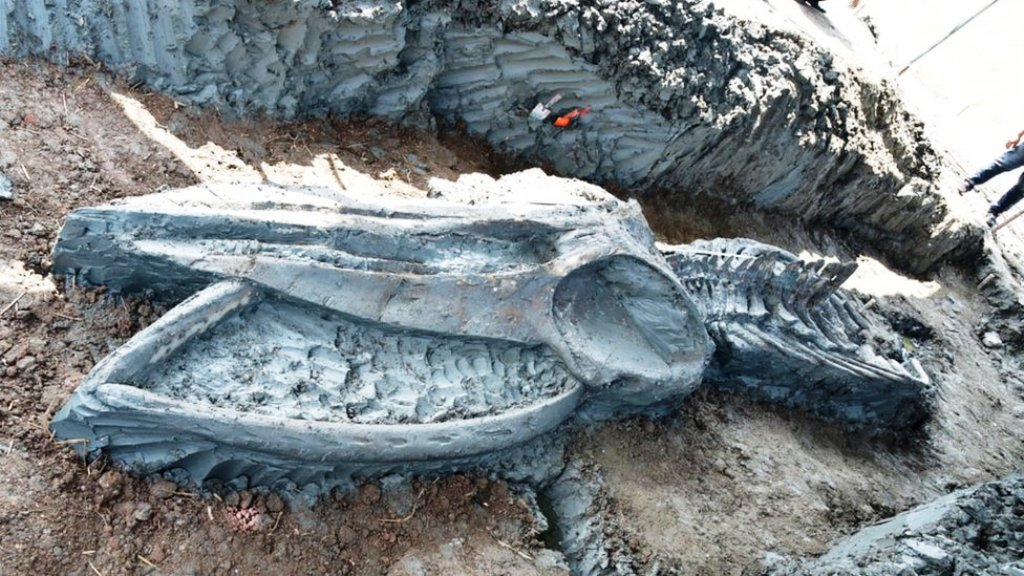 Ancient Whale Skeleton Discovered in Central Thailand