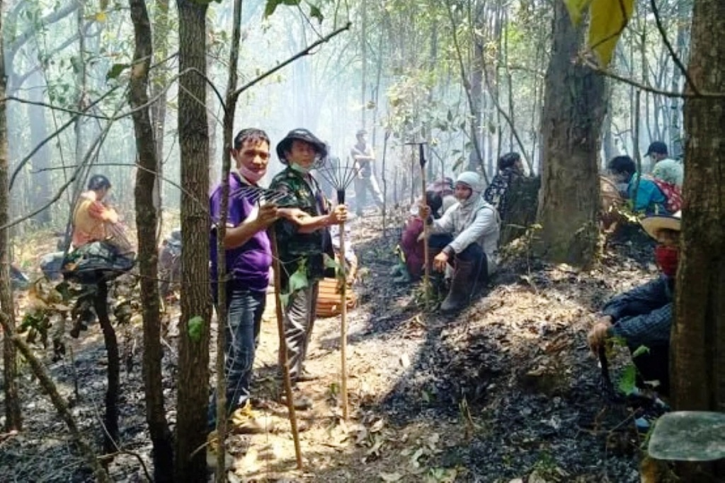 Northern Thailand to Harvest Dead Leaves for Renewable Energy Source