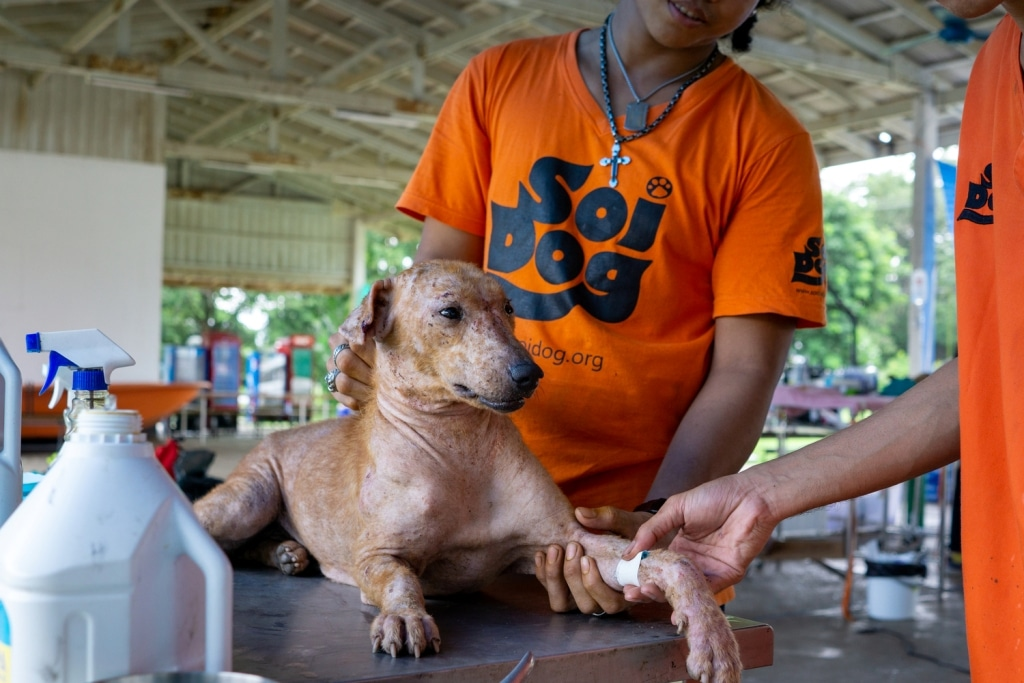 Soi Dog Foundation Celebrates Half-a-Million Sterilizations