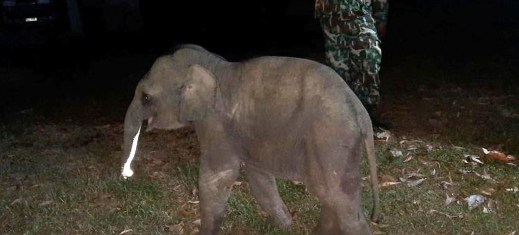 VIDEO: Baby Elephant Hit by Motorcycle Survives after Receiving CPR
