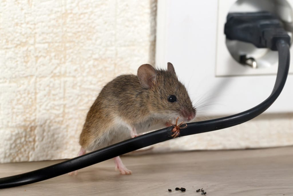 Mouse Control is on the Table Only if Seen Running on Capitol Hill