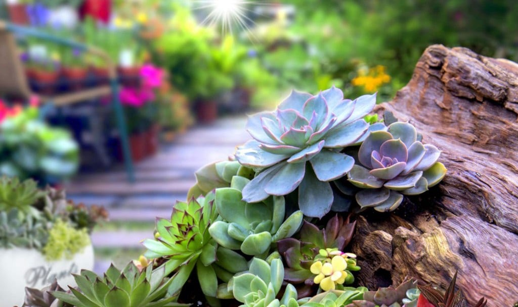 Gardening Professionals See Huge Demand For Plant Succulents In 2021