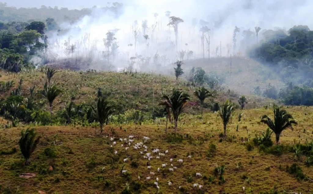 Food Production is the Primary Driver of Biodiversity Loss
