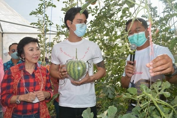 Heart-Shaped Watermelon Auctioned Off for Over US$3,000.00