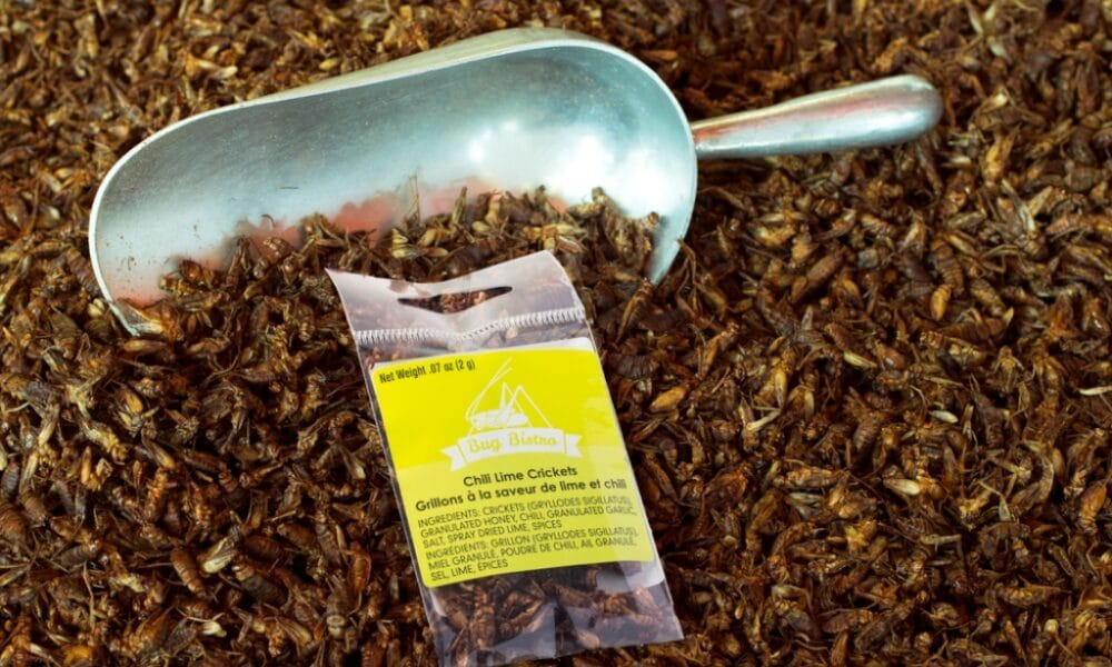 Mexico to Import Edible Cricket Products from Thailand