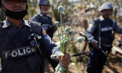Opium Production Drops in Myanmar as Synthetic Drug Market Expands