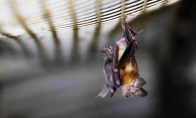 Scientists Finds Bats in Thailand Carry Coronavirus Similar to COVID-19