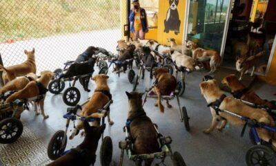 Shelter for Disabled and Stray Dogs in Thailand Threatened by Pandemic