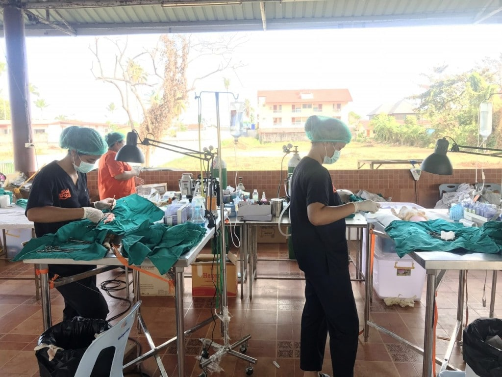 Soi Dog Foundation Sets Up Mobile Clinic on Koh Samui
