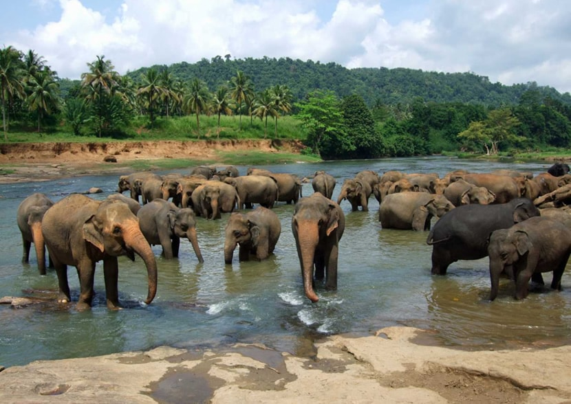 An Introduction to Thai Elephants