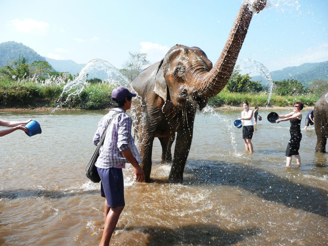 How Will Elephants in Thailand Be Treated Once Tourists Return