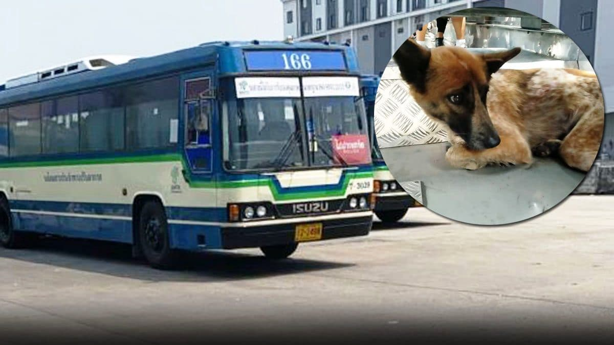 Bus Driver Praised After Rescuing Exhausted Stray Dog from Expressway