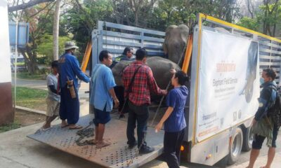 Elephants Poisoned after Eating Grass Contaminated with Paraquat