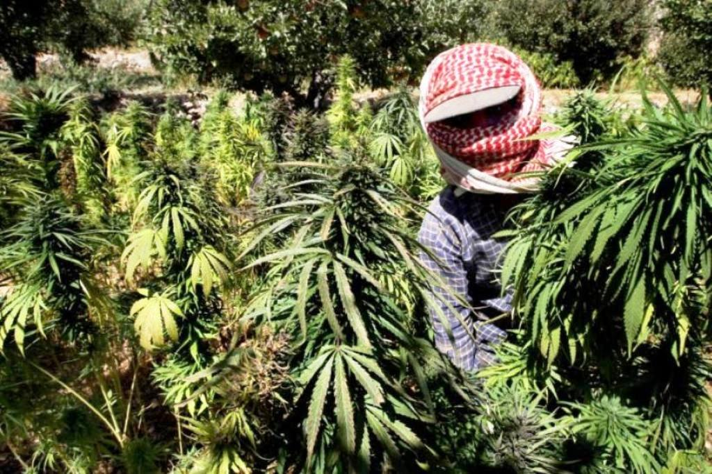Farmers in Thailand Warned Over Hemp Cultivation Scams