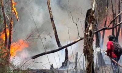 Firefighters Struggling to Combat Brush Fires in Northern Thailand