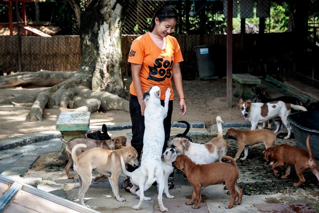 Soi Dog Foundation Warns Global Animal Health is Being Overlooked