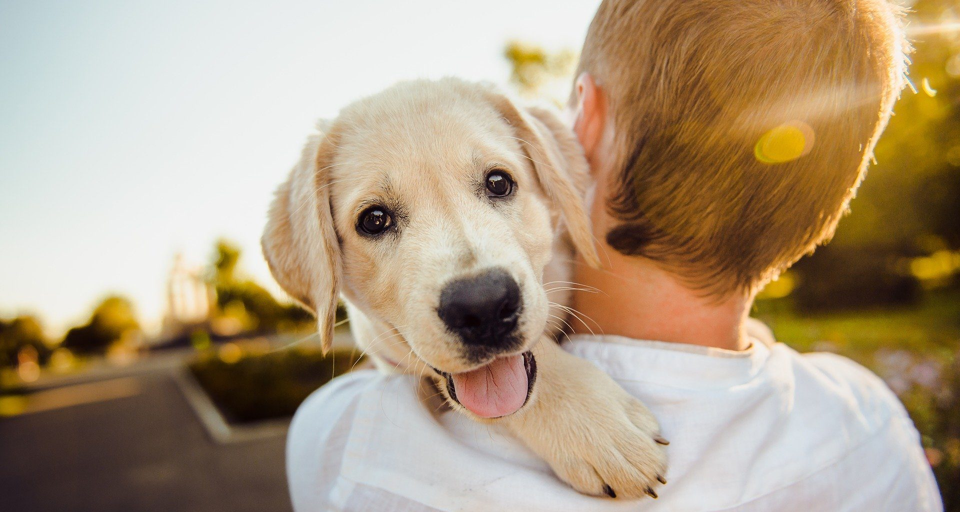 the best brands for pet insurance of 2021.