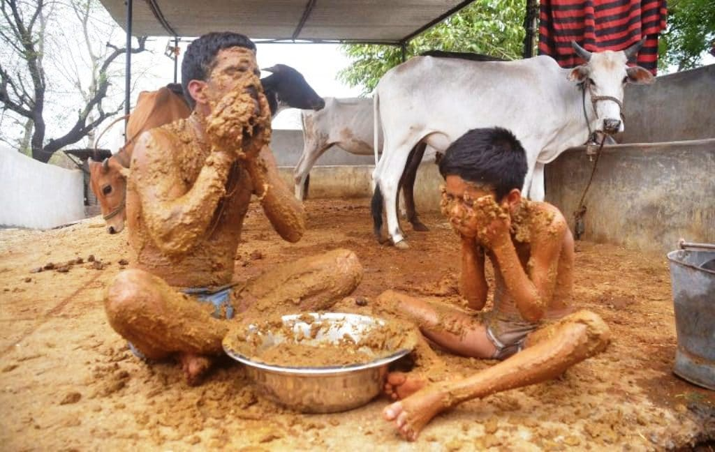 Indian Doctors Warn Over Using Cow Dung as Covid-19 Cure