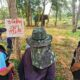 """Mahout and Elephant """"Cherry"""" Fall Under Hard Times after Tourist Killed"""
