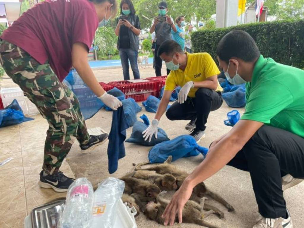 88 Macaque Monkey's Destined for Dinner Tables in China Saved