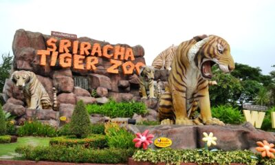 Thailand's Sriracha Tiger Zoo Closes its Doors after 24 Years in Business