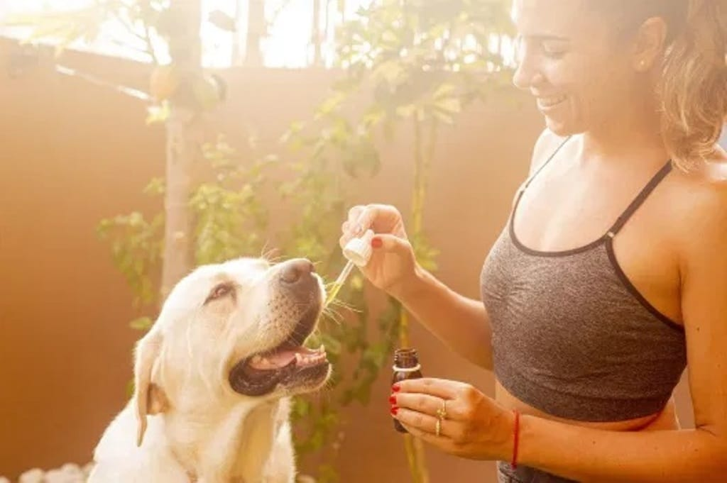The Advantages of CBD Oil: Learn About Your Pets and CBD